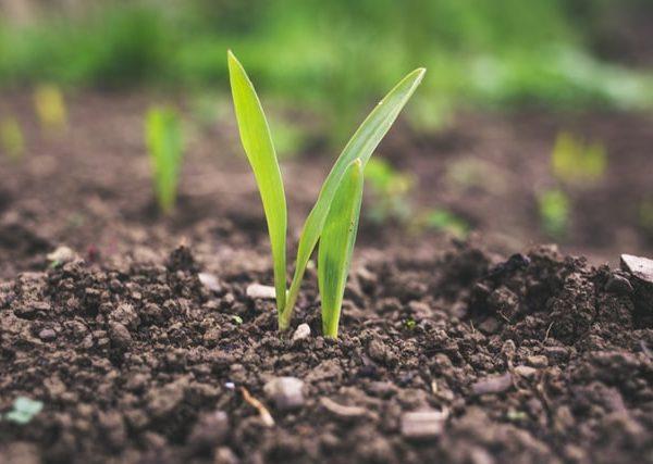 Jak zapewnić odpowiednie plony?